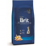 brit-premium-cat-kitten-l